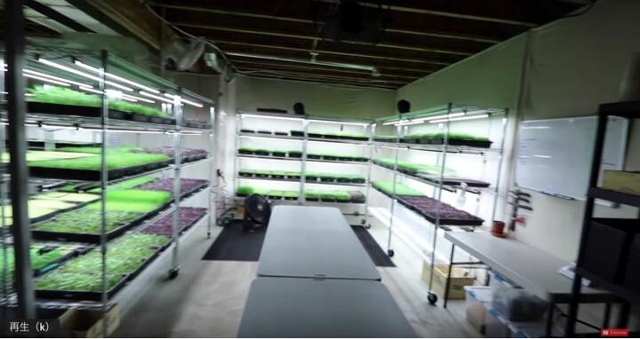 地下室で野菜を栽培