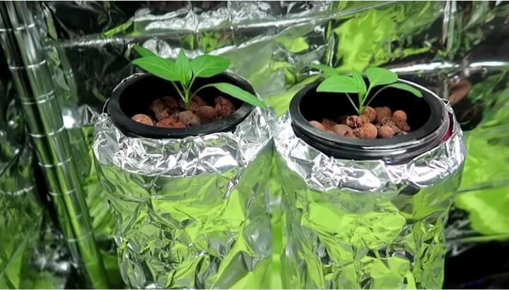 パプリカの水耕栽培