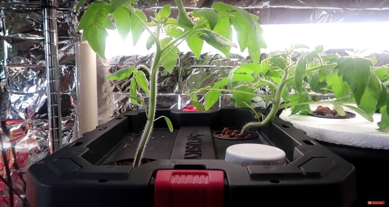 収納ボックスで水耕栽培システムを作ろう