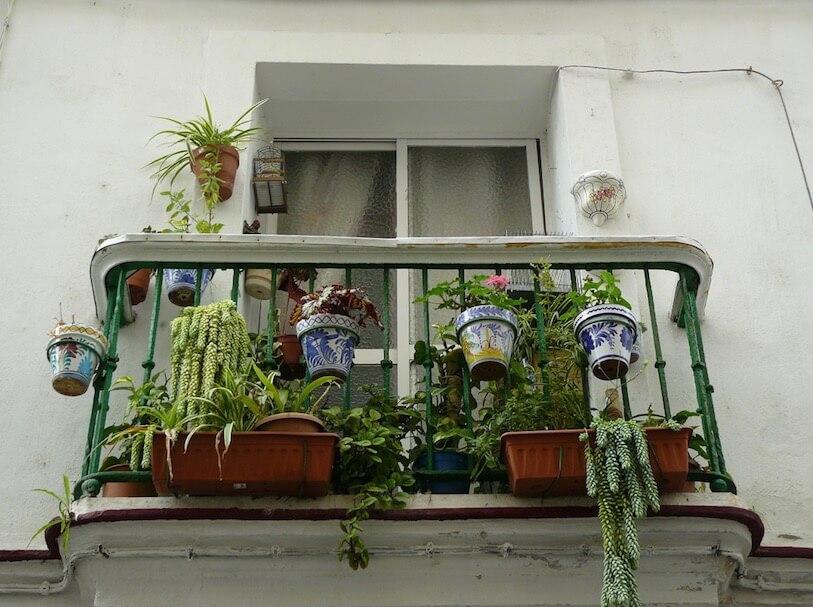 野菜の空中栽培